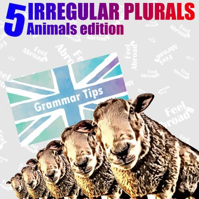 5 IRREGULAR PLURALS – Animals edition