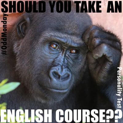 Should you take an English course??