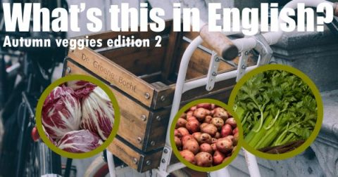 Autumn veggies edition 2